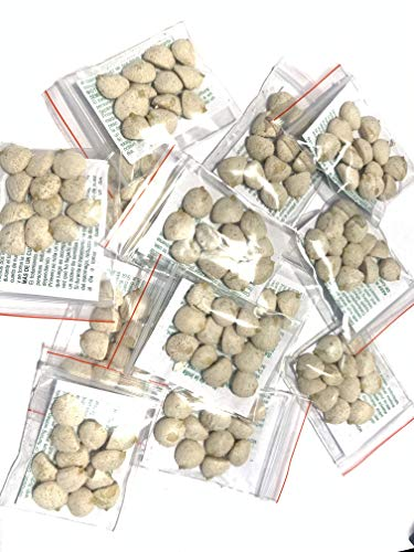 10 Pack Indian Nut 120 Seeds for Weight Loss original Nut,Indian seed